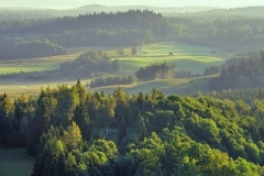 Latvia's forest landscape