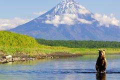 Grizli-fishing-for-salmon