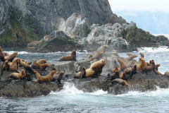 Profusion of surrounding ocean - sea lions, seals, otters, etc.